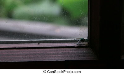 Fat fly against a dirty window pane - Keeping an eye on fat...