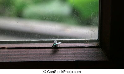 House fly settled in a corner of the dirty window