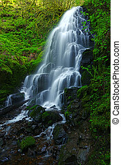waterfall in forest - waterfall in oregon rain forest near...