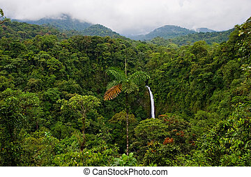 Rain Forest - Wonderful view over Costa Rican rain forest....