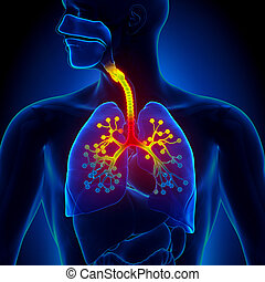 Bronchiolitis - Inflammation of the bronchioles