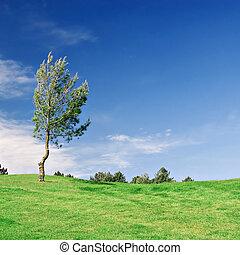 Pine Tree on green field