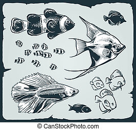 Vector set: vintage illustration of fish over blue...