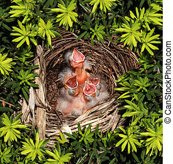 Chicks Hatchling Nest - Chicks hatched in a bird nest with...