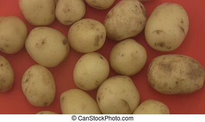 Organic potatoes, red background