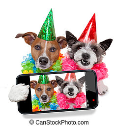 birthday dogs selfie - couple of dogs taking a selfie...