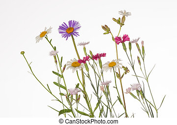 colorful wildflowers - delicate fragile colorful wildflowers...