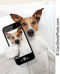 sleepyhead selfie dog - sleepyhead dog taking a selfie while...