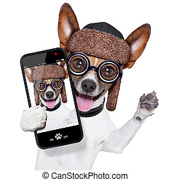 dumb crazy dog selfie - crazy silly dog with funny glasses...