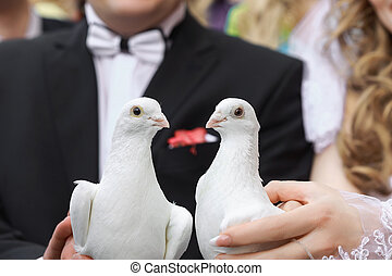 Two white doves - Bride and groom taking two white doves