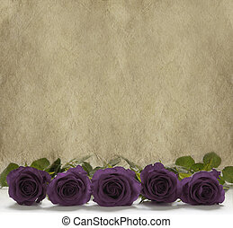 Purple Roses Banner - Single row of purple rose head on a...