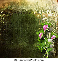 Old shabby cement wall with bouquet of delicate pink clover