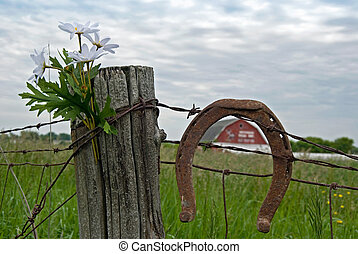 Country Daisies - Daisy bouquet and a rusty horseshoe on a...