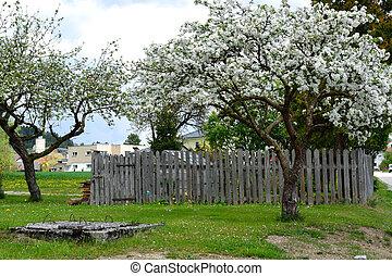 Apfelbaeume vor altem Gemuesegarten - Apple trees in front...