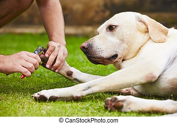 Cutting toenails - Man is cutting toenails of the dog