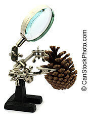 Magnifier man with pine cone - A mangnifier man looking at a...