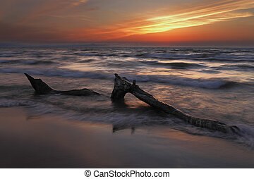 Driftwood on Lake Huron Beach at Sunset - Pinery Provincial...