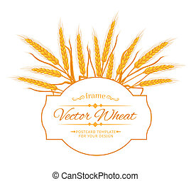 Wheat ear card - Ears of wheat on white background Vector...