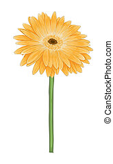 beautiful bright yellow gerbera with watercolor effect...