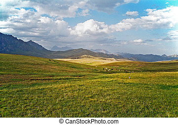 asian landscape - steppe, cattle and pamir mountains - photo...