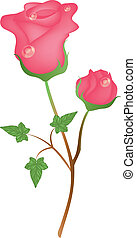 pink roses 2 - Is a EPS 10 Illustrator file