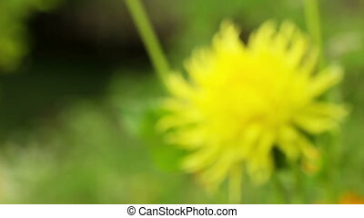 Summer flower blooming on the wind - soft focus