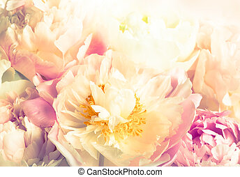 pink peony - background of beautiful pink peony in vintage...