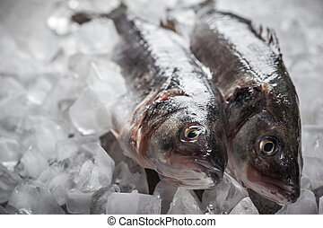 Sea bass on ice - Whole Sea bass on ice