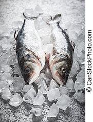 Sea bass on ice - Whole Sea bass on ice