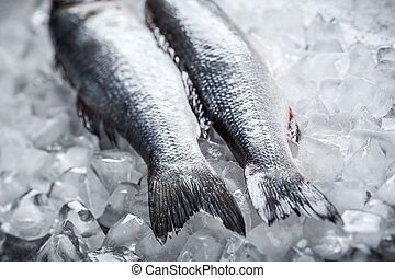 Sea bass on ice - Whole Sea bass on ice. Soft focus