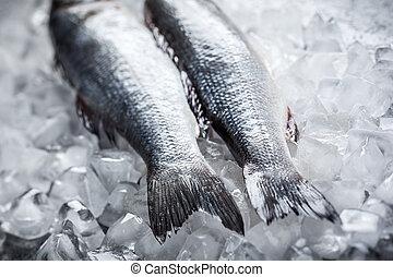 Sea bass on ice - Whole Sea bass on ice. Soft focus
