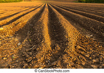 Ploughed Field - This ploughed field is on the south side of...