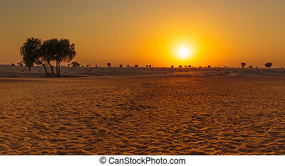 Sunset in the Arabian desert