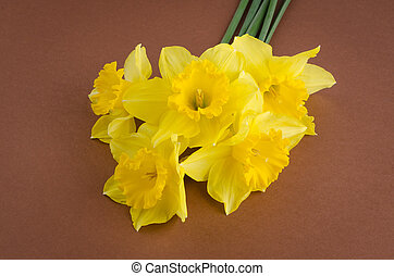 Jonquil flowers - Yellow jonquil flowers on paper...