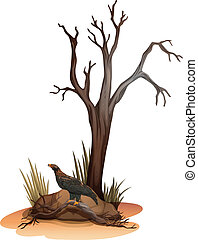 A dying tree with a wild bird