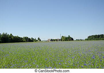 wide summer cornflower horizon - wide summer cornflower...
