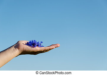 female hand with cornflower on blue sky background