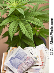 Marijuana business concept. Cannabis plant with banknotes in...