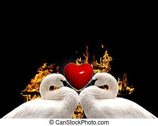 love birds background