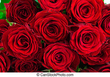 bouquet of red roses as a background - bouquet of bright red...