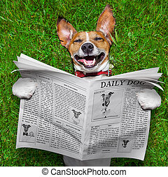 dog reading newspaper and relaxing on grass in the park