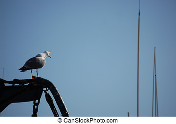 gull watching in a boat