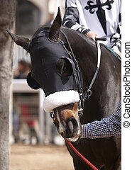 Race horse head with blinkers detail