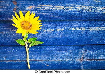 yellow sunflower painted fence - Yellow sunflowers on a...