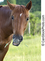 funny horse munching grass