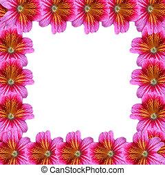Flower frame - flower frame