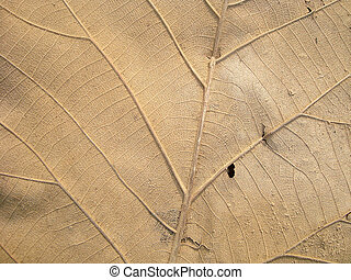 Old Leaf Texture - Grunge Dry Leaf Texture Background