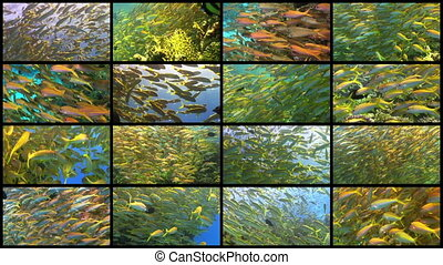 Video Wall Tropical Fish on Vibrant Coral Reef