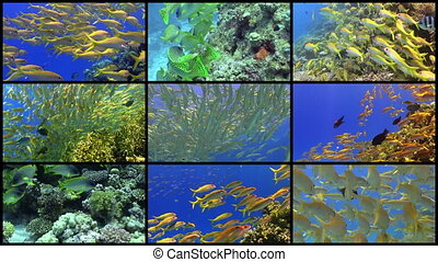Video Wall Tropical Fish on Vibrant Coral Reef, 9 screens...