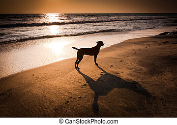 Dog at tropical beach under evening sun India